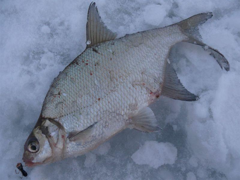 способы ловли рыбы зимой без удочки