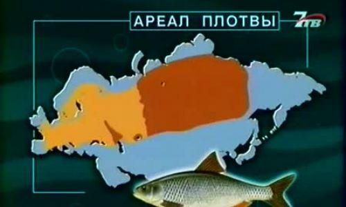 Диалоги о рыбалке вобла