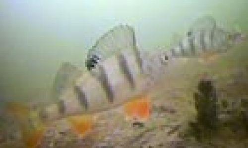 Рыбалка видео съемки под водой ловли